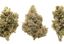 CBD Cannabis Strains