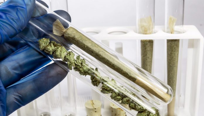 Cannabis Experience Using Your DNA